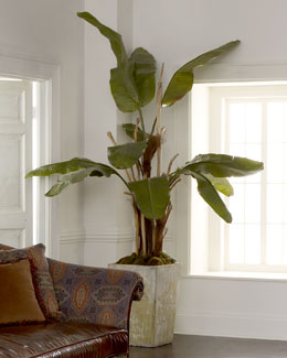 John-Richard Collection Natural Banana Tree