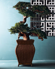 Preserved Bonsai Tree -  Horchow