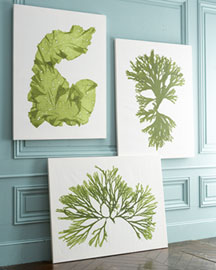 Horchow Seaweed Prints